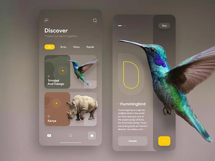 Dicover Application Design